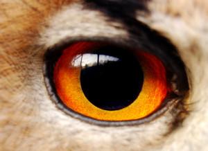 oko_orła